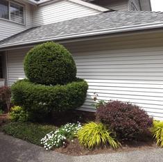 Sue's landscaped property