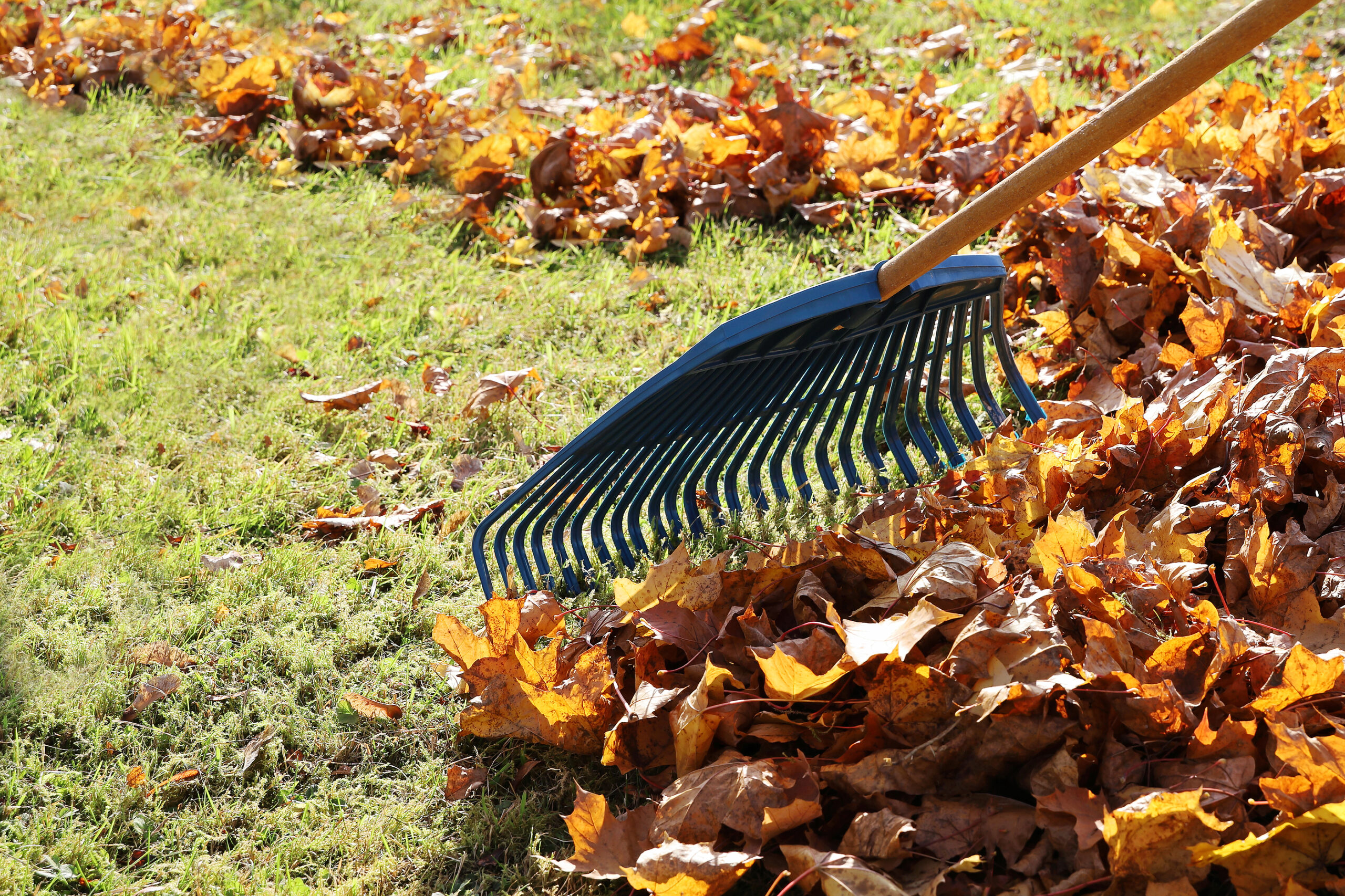 Rake involved in landscape clean-up
