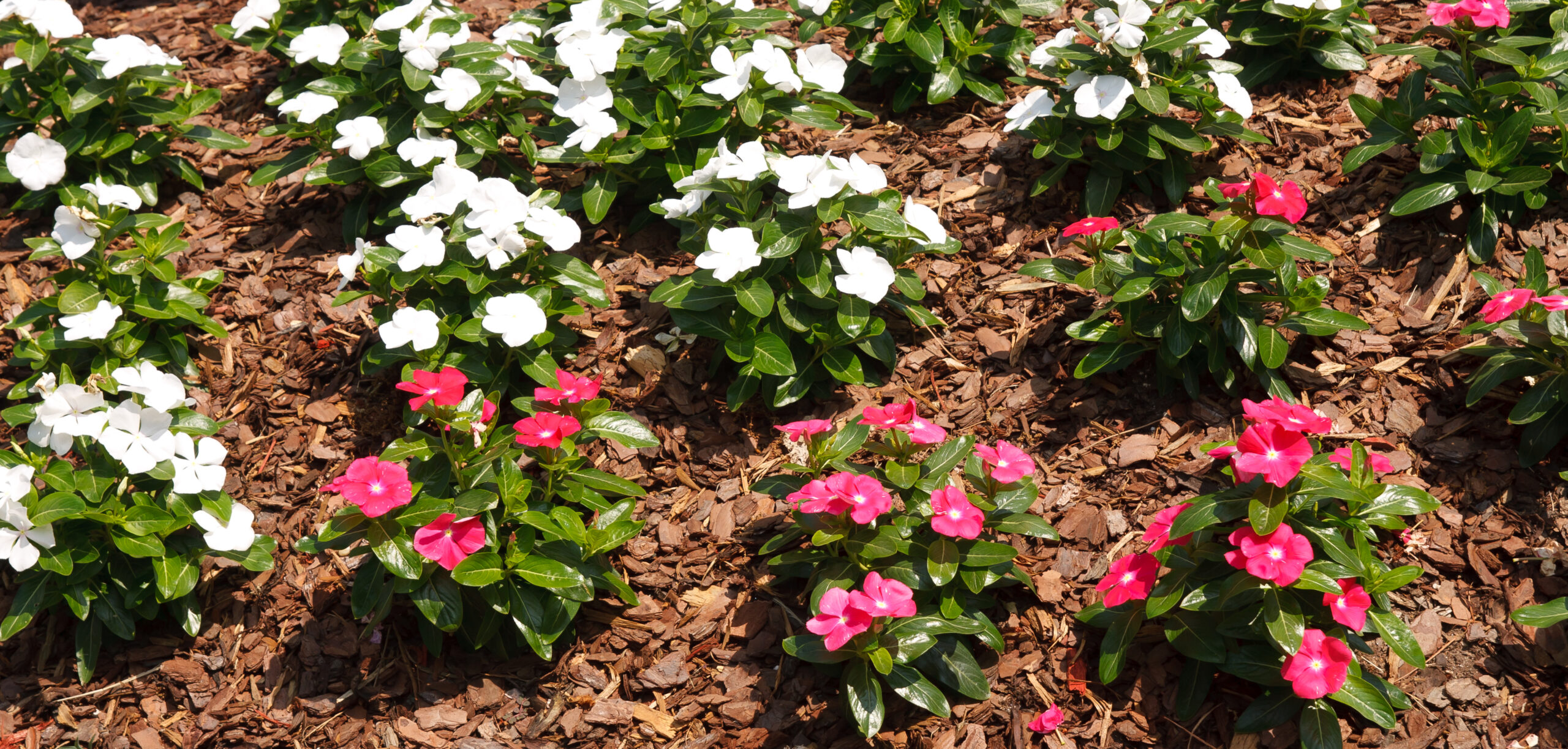 a flower bed that has benefited from mulching