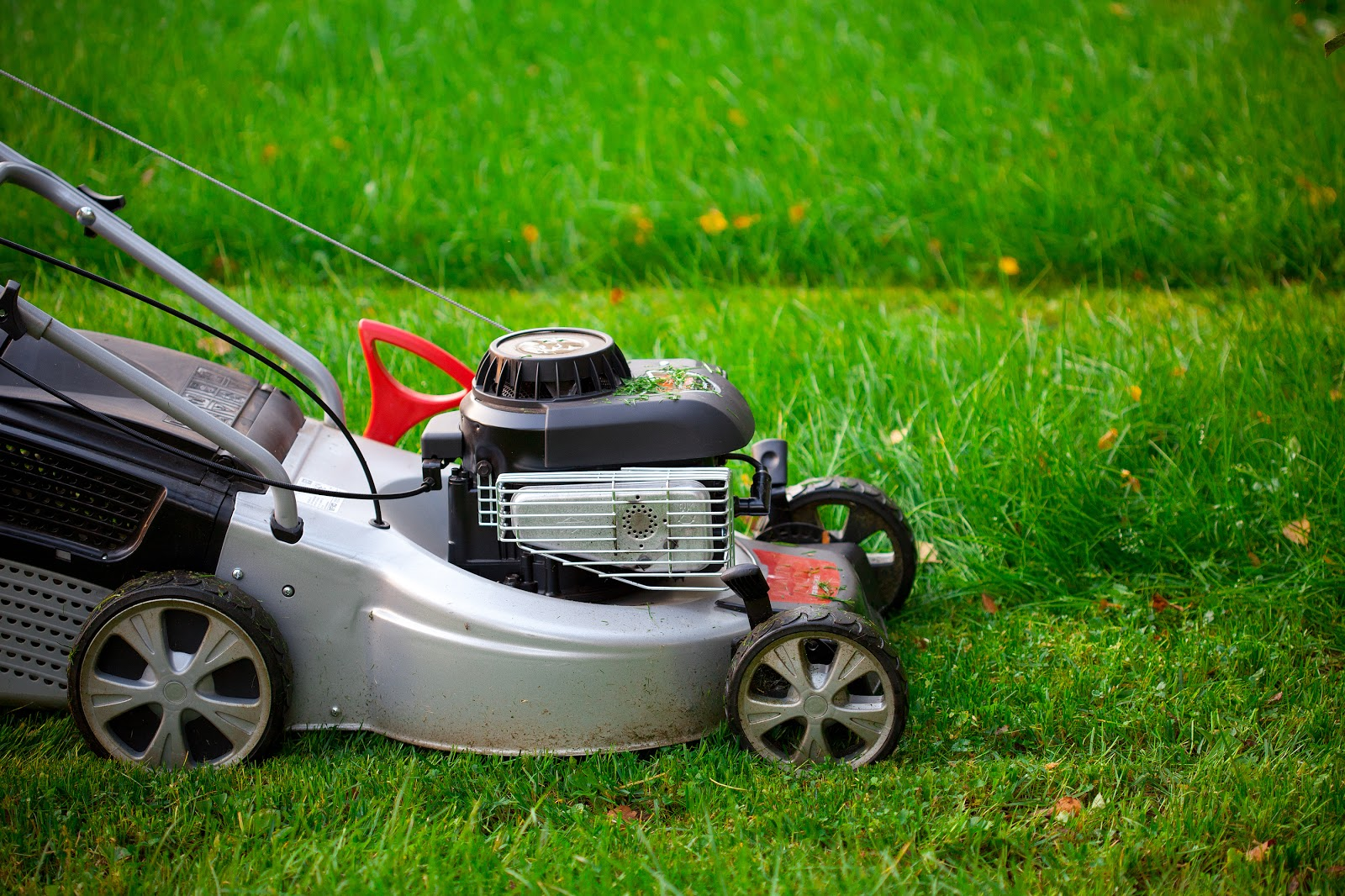 green lawn getting lawn care services with a mower
